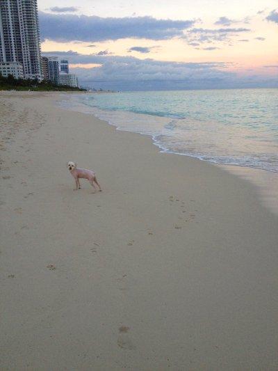 Puesta de Sol en Miami Beach