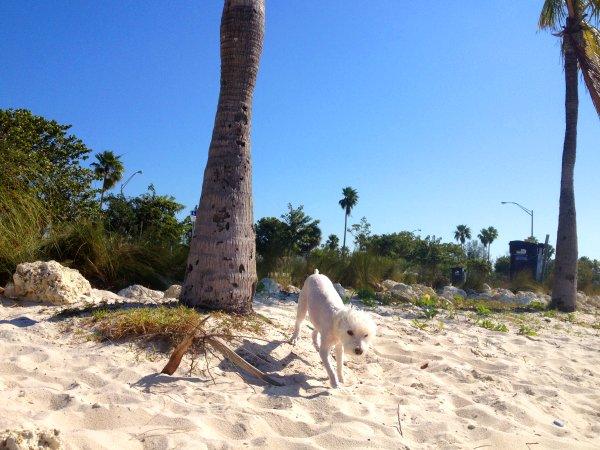 Playa para Perros en Key Biscayne