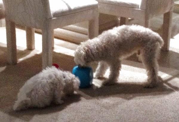 juguete perfecto para un perro